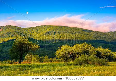 moonrise over the mountain ridge. rural valley in sunset light. beautiful countryside landscape. blu sky with pink cloud
