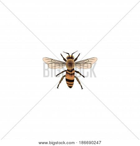 Realistic Housefly Element. Vector Illustration Of Realistic Wisp Isolated On Clean Background. Can Be Used As Housefly, Wisp And Wasp Symbols.