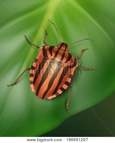 Vector orange, black striped shield bug close up on leaf with blur green background top view