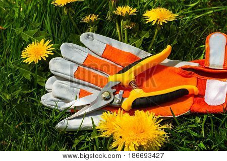 new garden scissors and working gloves on lawn with dandelions