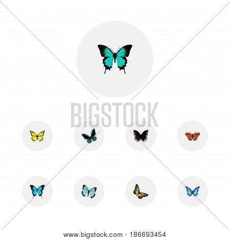Realistic Spicebush, Lexias, Archippus And Other Vector Elements. Set Of Butterfly Realistic Symbols Also Includes Fly, Black, Morpho Objects.