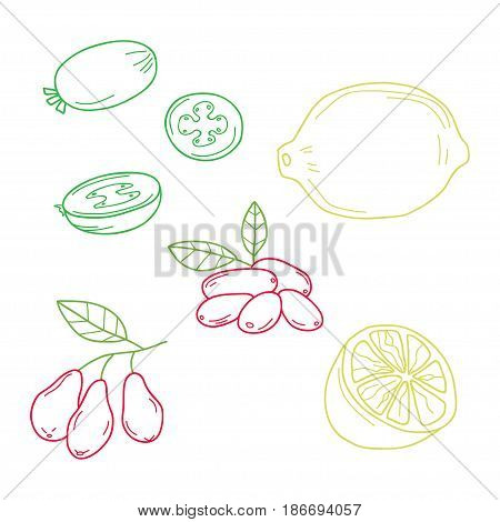 Hand drawn sketch fruits - pineapple guava, lime. dogwood berries. Eco food. Vector set.