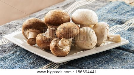 champignon mushroom close up on the table