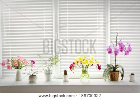 Beautiful flowers and home plants on windowsill
