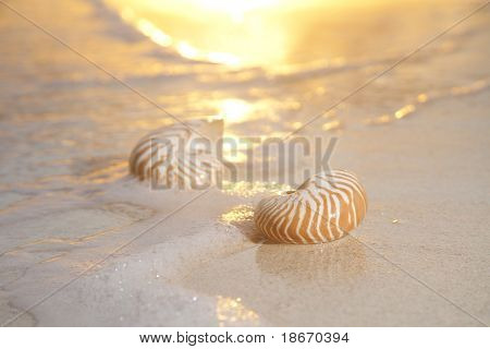 two nautilus shells in the sea , sunrise, very very soft warm overexposed light