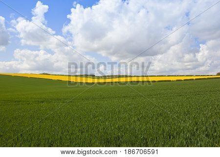 Wheat And Oilseed Rape