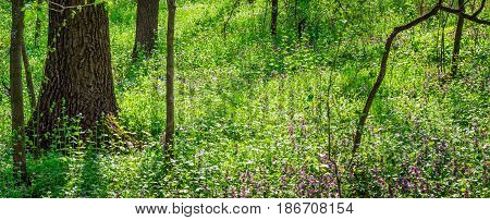 Incredibly beautiful nature in the forest everything is green and bright everything grows and blossoms