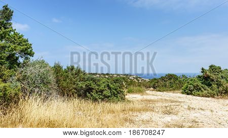 Green shrubs on stony ground with view of blue sky. Cyprus