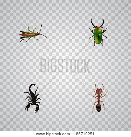 Realistic Poisonous, Insect, Locust And Other Vector Elements. Set Of Insect Realistic Symbols Also Includes Grasshopper, Scorpion, Bug Objects.