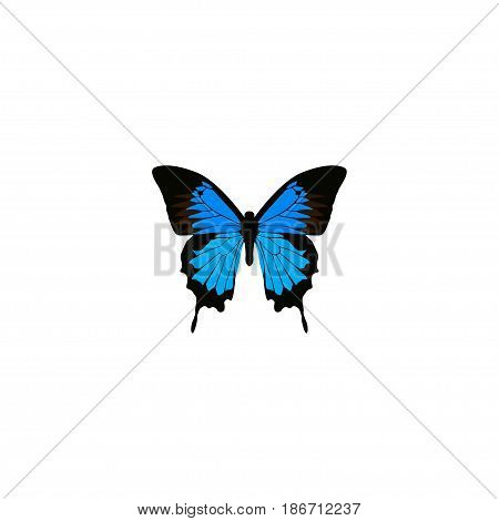 Realistic Polyommatus Icarus Element. Vector Illustration Of Realistic Common Blue Isolated On Clean Background. Can Be Used As Blue, Cypris And Butterfly Symbols.