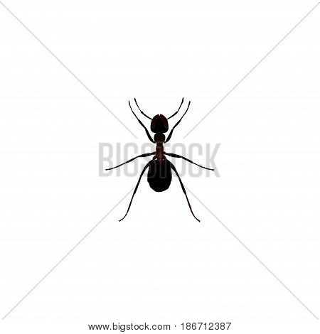 Realistic Pismire Element. Vector Illustration Of Realistic Ant Isolated On Clean Background. Can Be Used As Pismire, Ant And Emmet Symbols.