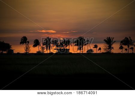 Cuban Sunset in Havana with palm trees and hut