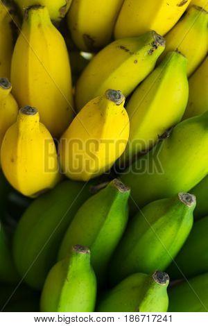 tropical food - bunch of green and yellow bananas