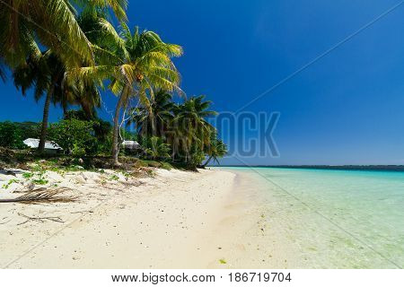 samoa white sand beach with palm trees and clear ocean