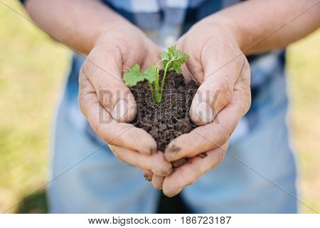 Saving nature. Close up of mature male hands with a young green plant and a handful of earth outdoors