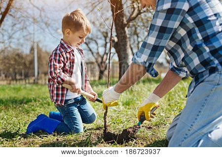 Real men labour. Team of two male family member standing on knees and planting a tree in a backyard garden