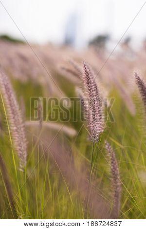 Beautiful nature landscape  Alpine meadow. Grass closeup with sunbeams