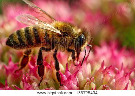 macro shot of wasp on oink flower.