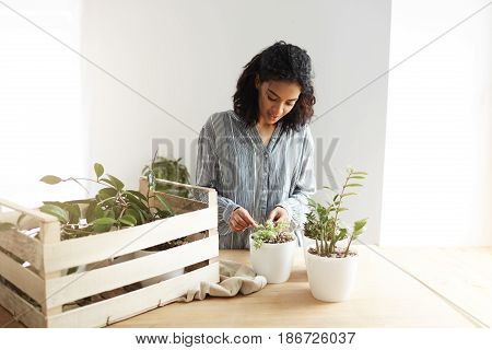 Beautiful african girl botanist smiling care for plants at workplace. White wall. Copy space.