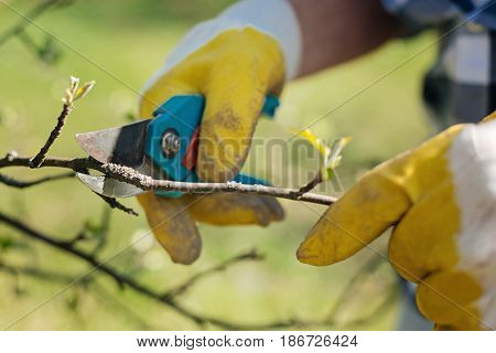 Saving mother nature. Gardeners hands cutting the tree branches with stainless secateurs in spring