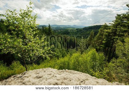 Beautiful summer landscape with meadows forests and sky
