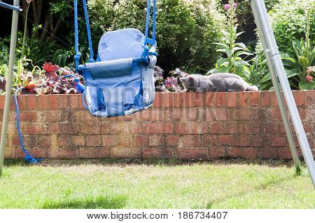 Cat Relaxing In The Garden On A Sunny Afternoon