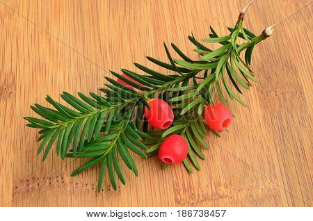 Red ripe yew berries on fresh green twigs on brown plank
