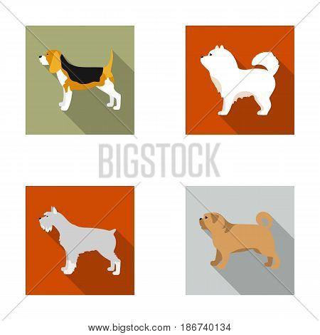 Chau chau, levawa, schnauzer, pug.Dog breeds set collection icons in flat style vector symbol stock illustration .