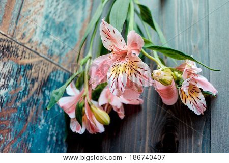 a few flowers Alstroemeria pink flowers with spotted petals on a wooden background with a very interesting texture