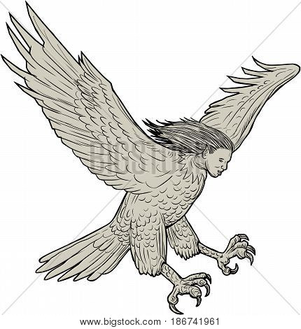 Drawing sketch style illustration of a harpy in Greek and Roman mythology a female bird with a woman's face swooping looking down viewed from the side set on isolated white background.