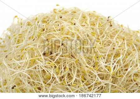 closeup of a pile of alfalfa sprouts on a white background