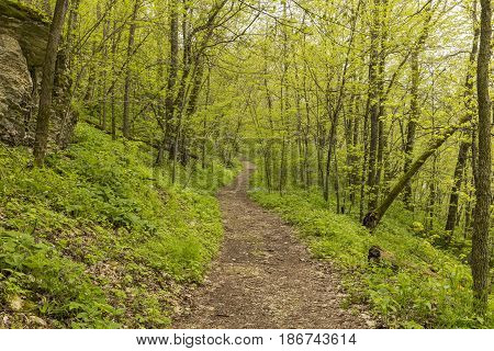 Spring Trail Scenic - A hiking trail in the woods during spring.