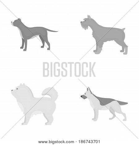 Pit bull, german shepherd, chow chow, schnauzer. Dog breeds set collection icons in monochrome style vector symbol stock illustration .