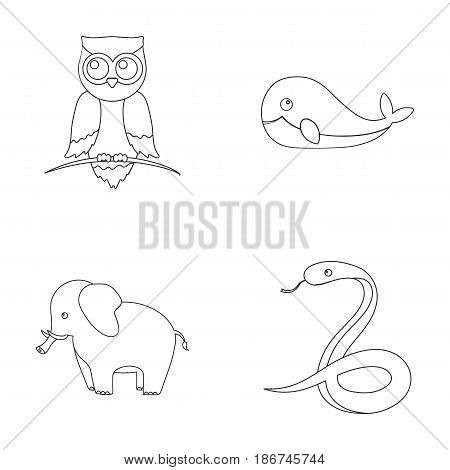 Owl, elephantism, snake, whale.Animal set collection icons in outline style vector symbol stock illustration.