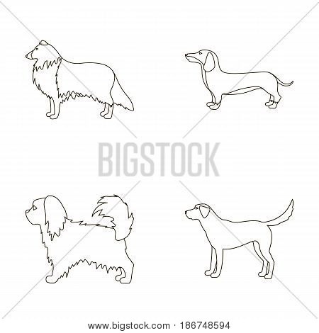 Collie, dachshund, labrador, pikinese.Dog breeds set collection icons in outline style vector symbol stock illustration .