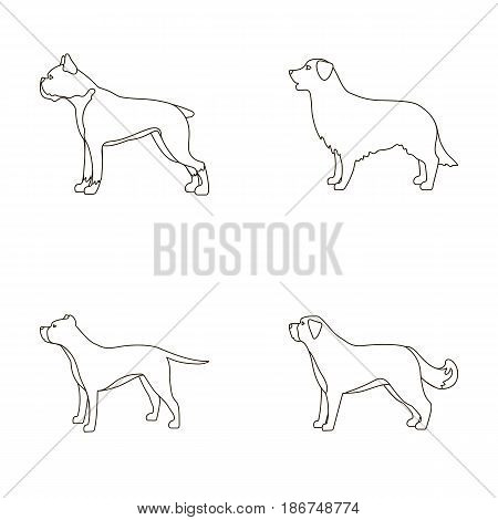 Boxer, pit bull, St. Bernard, retriever.Dog breeds set collection icons in outline style vector symbol stock illustration .