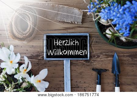 Sign With German Text Herzlich Willkommen Means Welcome. Sunny Spring Flowers Like Grape Hyacinth And Crocus. Gardening Tools Like Rake And Shovel. Hemp Fabric Ribbon. Aged Wooden Background
