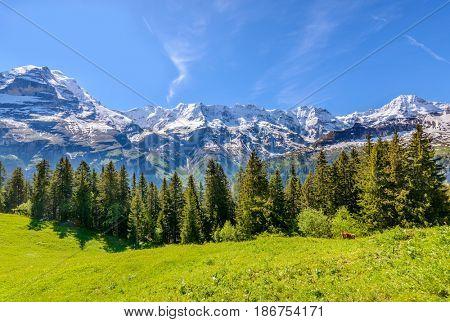 The Swiss Alps at Murren, Switzerland. Jungfrau Region. The valley of Lauterbrunnen from Interlaken.