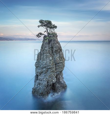 Portofino natural regional park. Lonely pine tree rock and coastal cliff beach. Long exposure photography. Liguria Italy