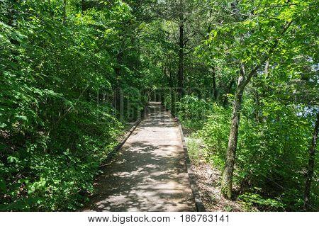 Hiking Path along Wood slat trail below