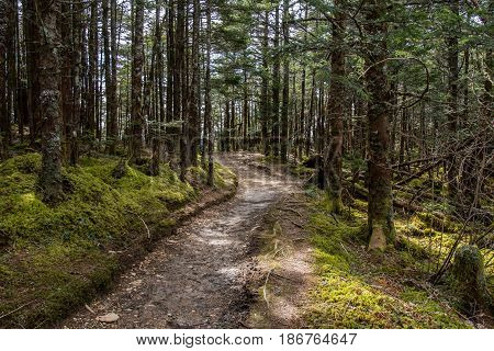 Trail Passes Through Mossy Forest