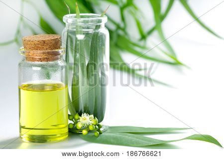 Eucalyptus essential oils in glass bottle oganic herbal aromatherapy concept