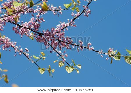 Spring blooming poster