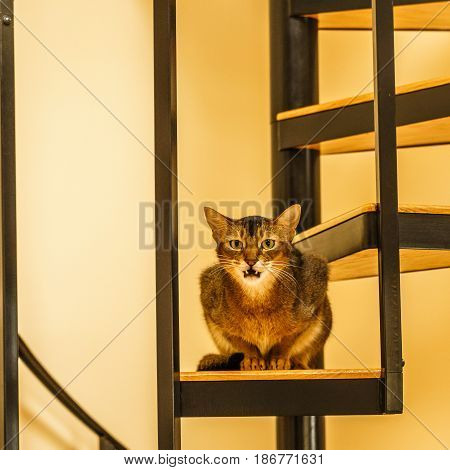 Beautiful grining cat sitting in the kitchen on a spiral staircase