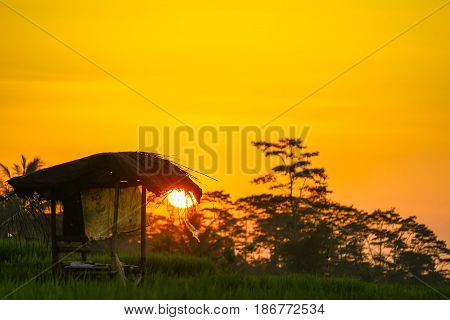 sunrise view at paddy field near semarang,Central Java,indonesia