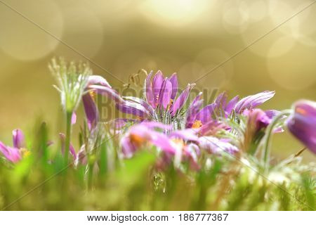 Wild flowers in the Meadow