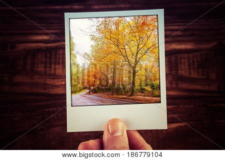 Hand Holding Polaroid Photograph Of Rural Road Among Autumn Trees With Golden Foliage. Alfred Nichol
