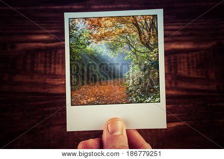 Polaroid Postcard Photograph Of Moody Sunlight Shining Through Autumn Foliage On Empty Footpath With