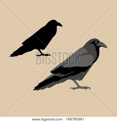 Raven vector illustration style Flat  profile silhouette set