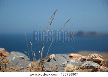 Grass growing from stone on sea background